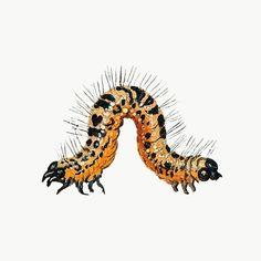 Butterfly Illustration, Fruit Illustration, Original Artwork, Original Paintings, Bug Tattoo, Science Images, Butterfly Artwork, Vintage Bee, Cleveland Museum Of Art