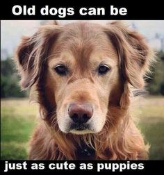 Old dogs can be just as cute as puppies!