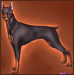 how to draw a doberman pincher dog