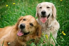 http://www.dogisto.com/5-popular-dog-breeds-alabama/