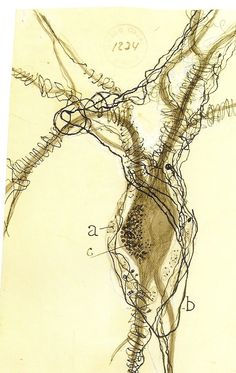 Brain neuron drawn by Santiago Ramon y Cajal, father of modern Neuroscience