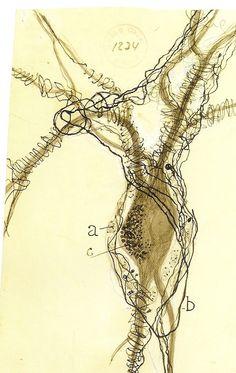 Brain neuron drawn by Santiago Ramon y Cajal, father of modern Neuroscience