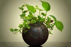 미세먼지 많은 봄에 키우면 특별히 더 좋은 식물 6종