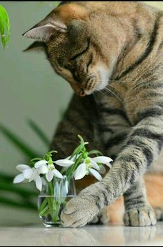 Baby Cats, Cats And Kittens, I Love Cats, Cute Cats, Four Legged, Pet Birds, Make Me Smile, White Flowers, Animals And Pets