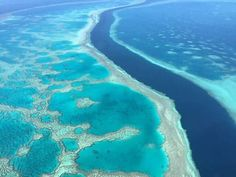 Directed evolution produces heat-resistant coral to endure climate change Heat Stress, Coral Bleaching, University Of Melbourne, Social Media Trends, Greenhouse Gases, Photosynthesis, Great Barrier Reef, Aerial View, Climate Change
