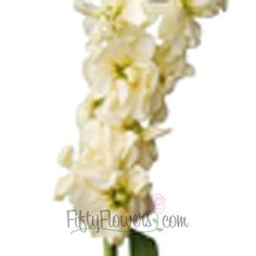 FiftyFlowers.com - Stock Light Yellow Flower