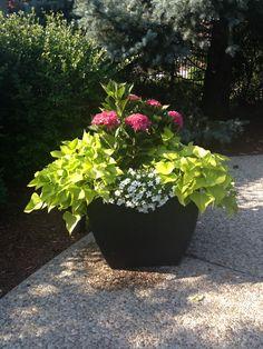 Promenade dans un Jardin Extraordinaire - Two classic concrete urns ...