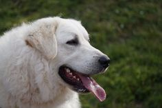 Is your dog white as snow? Here's 500 white dog name ideas for your pure and white puppy.