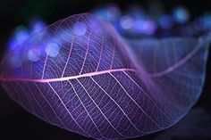 Stunning Photography by Shihya Kowatari is a Japanese photographer who captured the leaves and flowers under the lights of different colors. Leaf Photography, Stunning Photography, Digital Photography, Photography Ideas, Apple Illustration, Shades Of Violet, Creative Shot, Extreme Close Up, Fotografia Macro