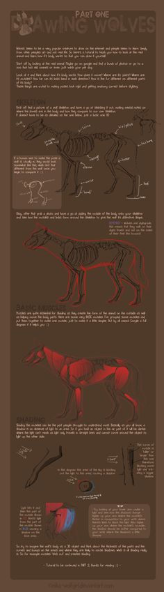 Drawing wolves: part one