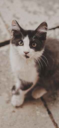 96 Best Cute Cat Wallpapers For Iphone Images In 2020 Cute Cat