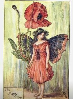 Vintage Cicely Mary Barker Poppy Flower Fairy iPhone Plus Wallet Case Cicely Mary Barker, Vintage Fairies, Vintage Flowers, Vintage Art, Art And Illustration, Fantasy Kunst, Fantasy Art, Flower Fairies Books, Fairy Pictures