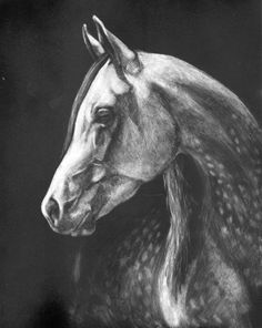 Scratchboard horse drawing by Barbara Fox