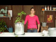 Trash Can Tomatoes | Planting and Growing Tomatoes with Emily Murphy