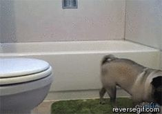 After: Pug Learns to Organize Shampoos in an Inconvenient Area, Means Well | 15 Backwards GIFs That Transform The Story
