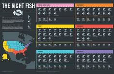 Good Fish Bad Fish [infographic] | Daily Infographic