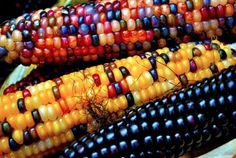 This Milkwood Permaculture post about 'Glass Gem Corn' is fascinating - I had no idea such a thing even existed! Who knew ears of corn could be so stunning?