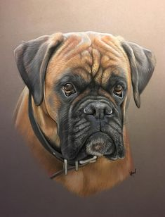 Boxer Breed, Boxer Puppies, Dogs And Puppies, Animal Paintings, Animal Drawings, Dog Portraits, Dog Photos, Dog Art, Dog Love