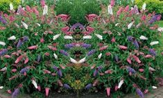 Butterfly Bush, Color Mixing, Life Is Good, Planters, Colours, Google Search, Life Is Beautiful, Plants, Buddleja Davidii