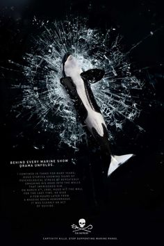 Few weeks before Tilikum death, Sea Shepherd expose the truth behind the myth that whales and dolphins thrive in captivity in their new campaign. The visuals. Sea Shepherd, Save Our Oceans, Marine Conservation, Best Ads, The Fox And The Hound, Lady And The Tramp, Creative Advertising, Advertising Design, Killer Whales