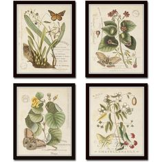 Vintage Butterfly and Botanical Collage Print Set No.1, Giclee,... ($40) ❤ liked on Polyvore featuring home, home decor, wall art, butterfly home decor, floral wall art, butterfly wall art, floral home decor and giclee wall art