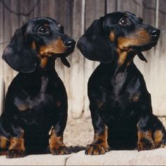 Hans & Fritz This looks just like my Bo & Shug