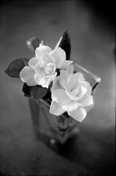 Perfect white roses #photography