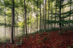 Fog Hunting by Sebastian_Tontsch #nature #travel #traveling #vacation #visiting #trip #holiday #tourism #tourist #photooftheday #amazing #picoftheday