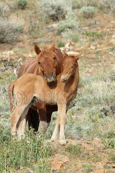 Wild horses of Oregon