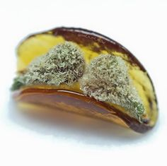 Looking to start a career in cannabis? Get certified at the premier cannabis certification program! Cannabis Training University is the most affordable and informative cannabis college in the world. Learn how to grow weed from cannabis cup winning growers. Anyone can enroll from anywhere. Learn on your own schedule, any time, day or night. No prior experience or education required. The leading marijuana school is CTU! www.thectu.com