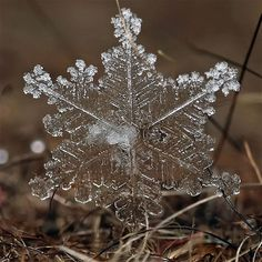 Stunning pictures of actual snowflakes and ice formations Andrew Osokin
