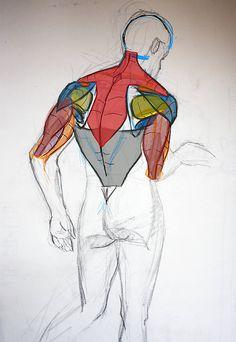 FranckH ✤ || CHARACTER DESIGN REFERENCES | 解剖 •  علم التشريح • анатомия • 解剖学 •…