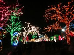 lincoln park zoo lights #chicago.