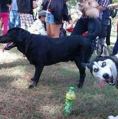 PHOTO BOMB: Probably one of the best dog photo bombs ever.