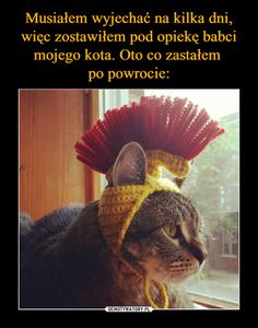 Wtf Funny, Funny Cute, Funny Images, Funny Pictures, Animals And Pets, Cute Animals, Hahaha Hahaha, Polish Memes, Great Memes