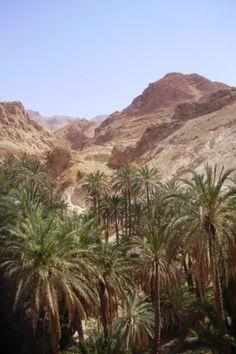 Oasis of Chebika - Sahara - Tunisia