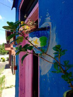 Pared con macetas. Asunción-Paraguay