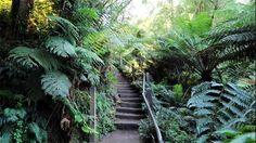 Steps Kokoda Walk, Yarra Valley and Dandenong Ranges, Victoria, Australia 1000 Steps, Stuff To Do, Things To Do, Yarra Valley, Victoria Australia, Running Away, Ranges, Botanical Gardens, Day Trips