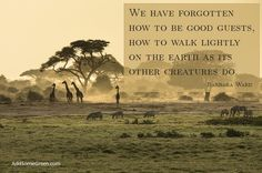 We have forgotten how to be good guests how to walk lightly on the earth as its other creatures do. Barbara Ward