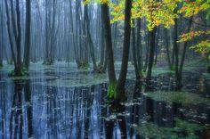 """""""Buchenwald Grumsin"""", a beech forest in Schorfheide-Chorin, Brandenburg, Germany.  by Dietrich Bojko."""