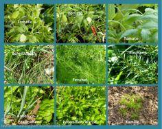 Kräuter Pflanzen Hochbeet Garten