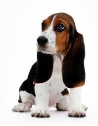 Mi blog de Mascotas | No compres… adopta! ;)