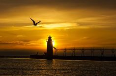 Gold and Gull 2 Photo by Timothy Wenzel -- National Geographic Your Shot