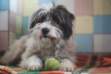 Berko Hund Mischlingshund In Bulgarien Tierheim Ausgestopftes