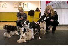 Petra Kodeda, left, who brought her pugs Ruby and Milo, and Meagan Rutter, staff coordinator at the Purina PawsWay, watch a group of dogs play at the facility's indoor dog park in Toronto.