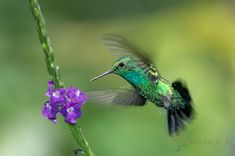 How to Photograph Hummingbirds | Nature TTL