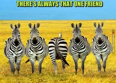 There's Always That One Friend.. - http://memeheroes.com/8de44-theres-always-that-one-friend/