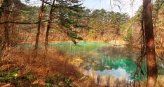 Goshikinuma - Fukushima's Otherworldly, Beautiful Rainbow Ponds | tsunagu Japan Stone Stairs, Natural Pond, Lake Resort, Fukushima, Day Hike, Ponds, Natural Wonders, Hiking Trails, National Parks