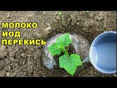 Plants, Veg Garden, Farm Gardens, Chicken Garden, Small Farm, Gardening Tips