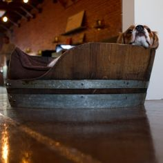 "Rollie, office dog. Bed made from the bottom of an old wine barrel.  Sevenly: ""We believe people matter, so we raise money"